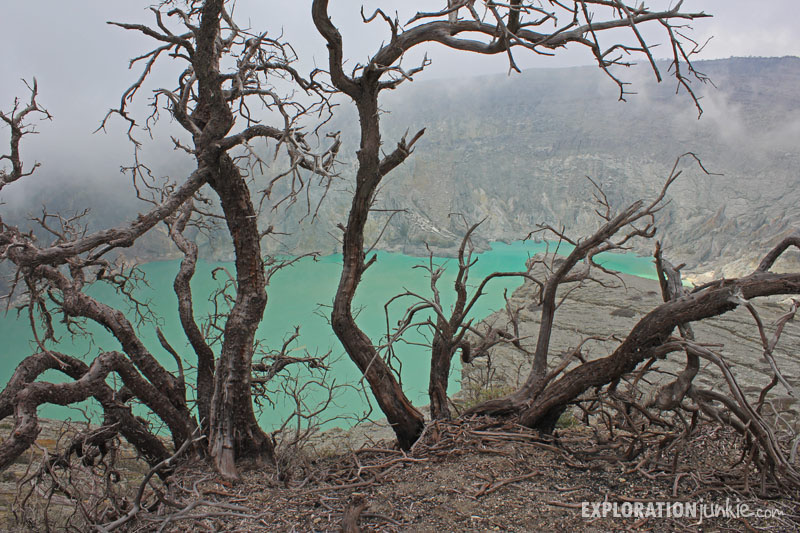 Ijen Crater dead trees