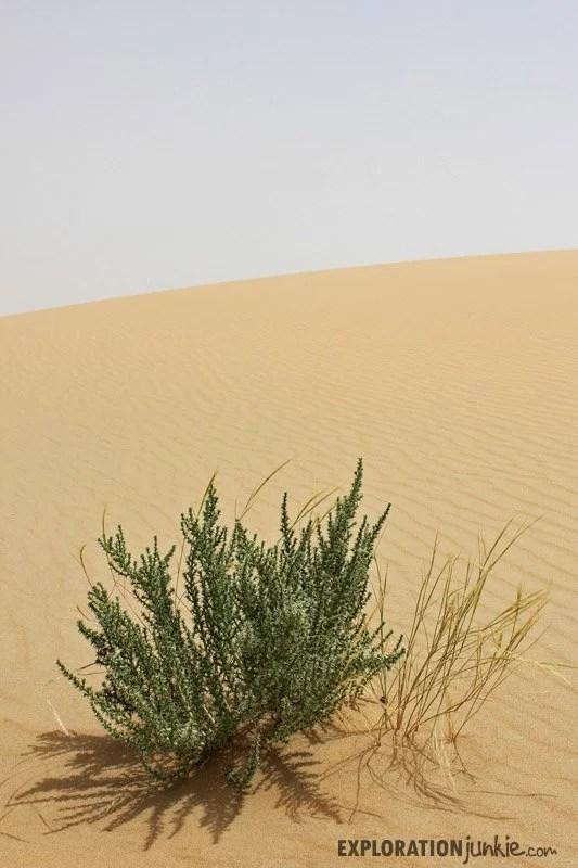 Desert of Qatar