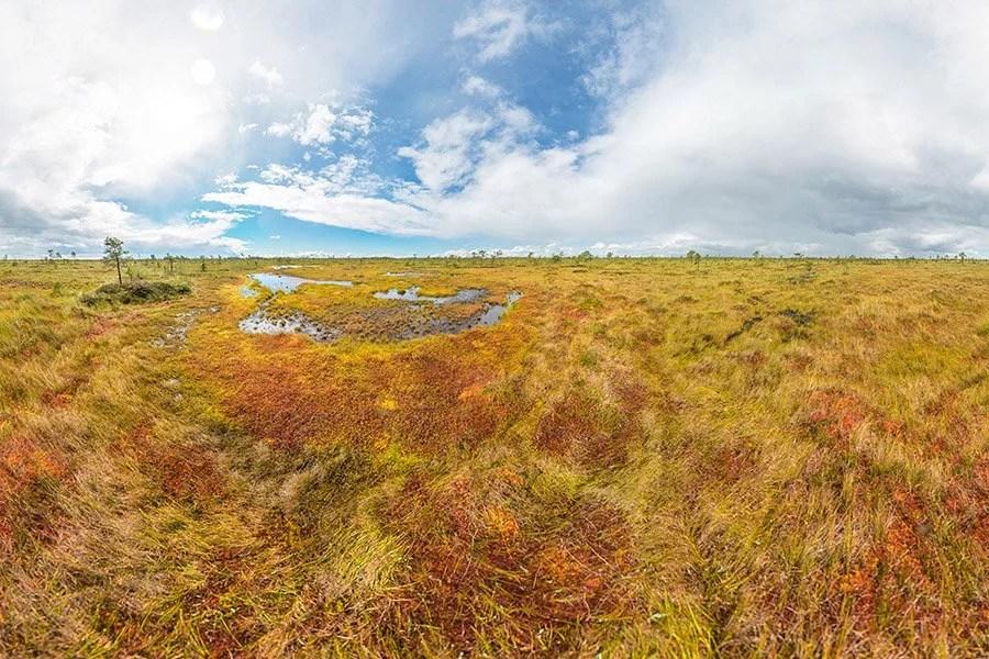 Soomaa National Park Bog Walking