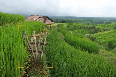 Here the main goal is of course to show the amazing rice terraces landscape, the small bamboo fance make an interesting feature for the foreground and shows an insider view of the rice fields.