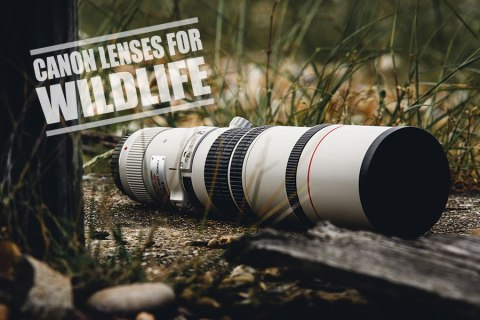 Best Canon Lenses for Wildlife Photography- The Ultimate Guide