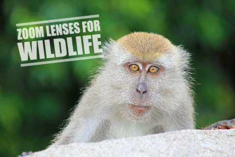 Zoom Lens For Wildlife Photography – Reviews & Guide