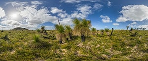 Indian Ocean Drive, Grass Trees