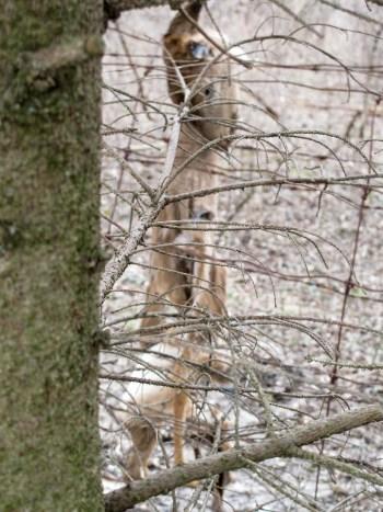Deer Skin Hunting