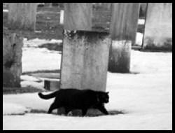 Old St. Thomas Church Black Cat