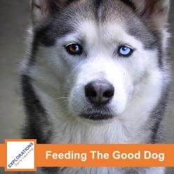 Feeding The Good Dog