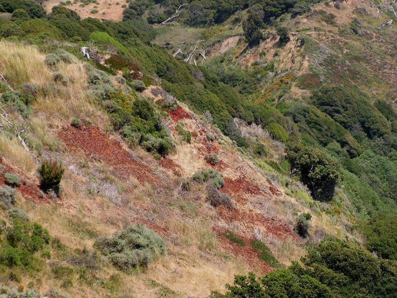 Angel Island - ExplorationVacation P5300161 hillside