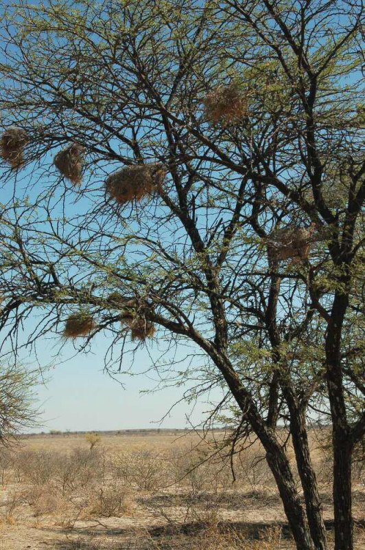 explorationvacation - 09-12 tree w nests2