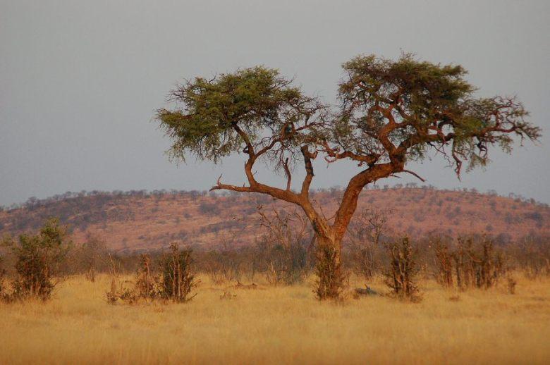 Botswana - ExplorationVacation - 09-22_10-47-57 tree