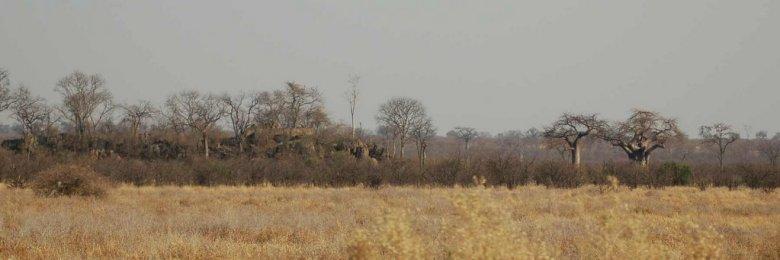 Botswana - ExplorationVacation 09-24_01-03-52 scenery leaving Savuti
