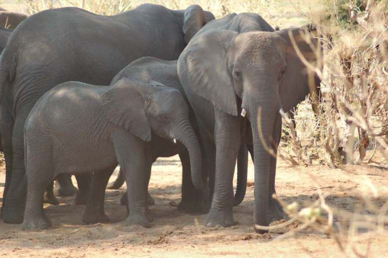 Botswana - ExplorationVacation 09-24_07-48-08 elephant family