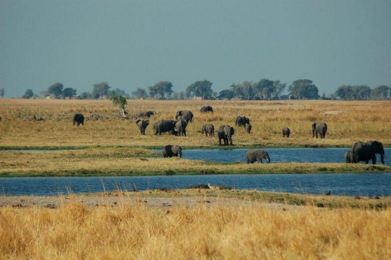 Botswana - ExplorationVacation 09-24_08-58-57 elephants.0