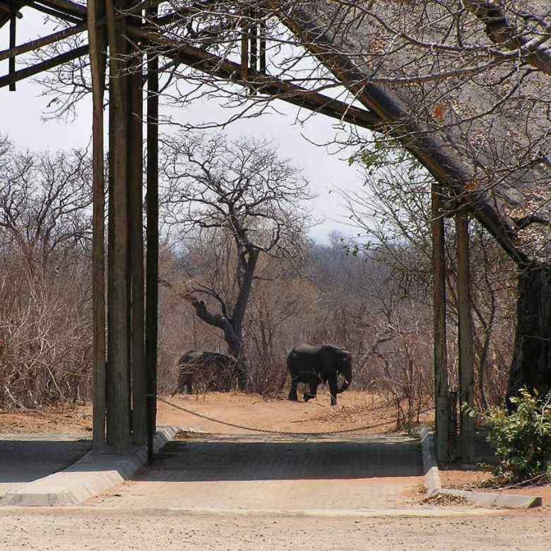 Botswana - ExplorationVacation P1010171 elephants at Chobe gate.0