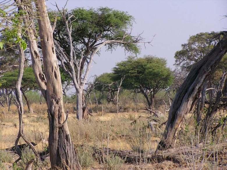 Moremi Botswana - ExplorationVacation - P1010100 scenery