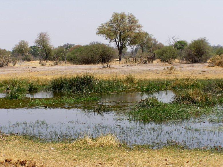 Moremi Botswana - ExplorationVacation - P1010106