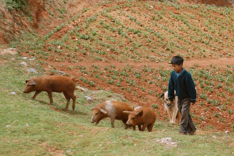 Peru - ExplorationVacation 2006-01-01_10_42_57