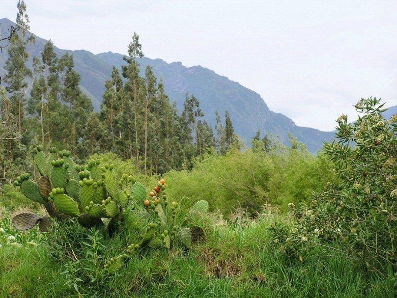 Peru - ExplorationVacation P1010028_0