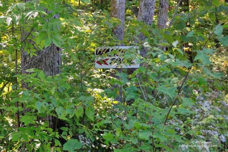 02-Leech Lake 8 DSC_5222 trail in Minnesota