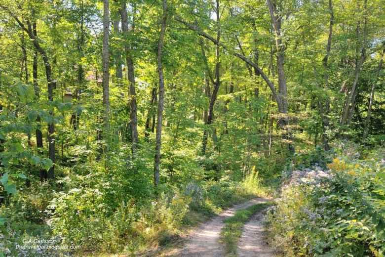 03-Leech Lake 6 DSC_5224 trail in Minnesota