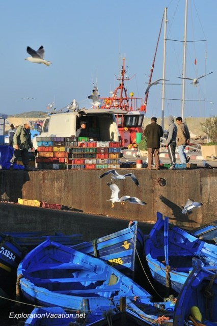 Essaouira fishing 18 DSC_8204 Morocco