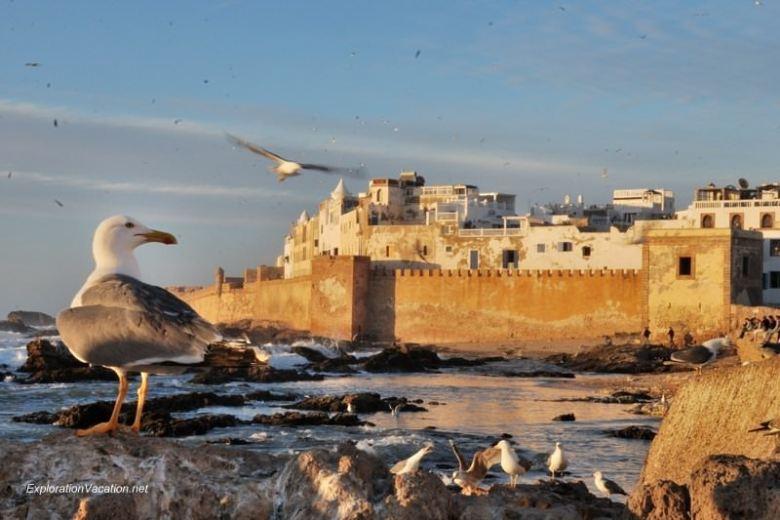 Essaouira seagulls 14 DSC_2324