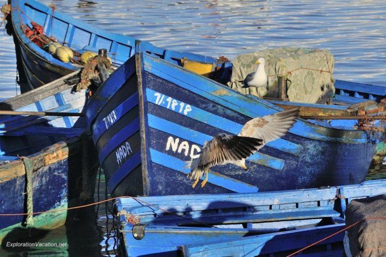 Essaouira seagulls 4 DSC_8209