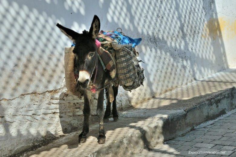 Donkey Traffic in Fes DSC_1117