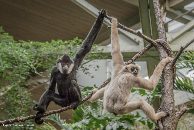 Primates at the Minnesota Zoo - ExplorationVacation.net