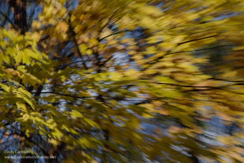 Fall in Kathio Mille Lacs State Park