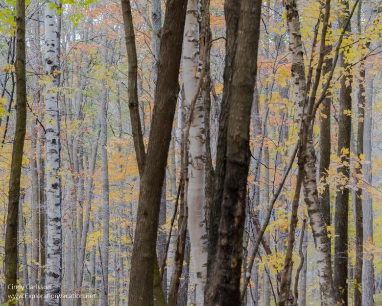 trees Fall in Kathio Mille Lacs State Park
