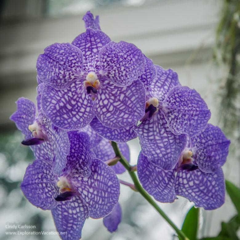 orchid New York Botanical Garden NYC