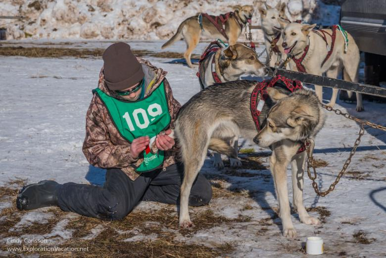 musher with dog