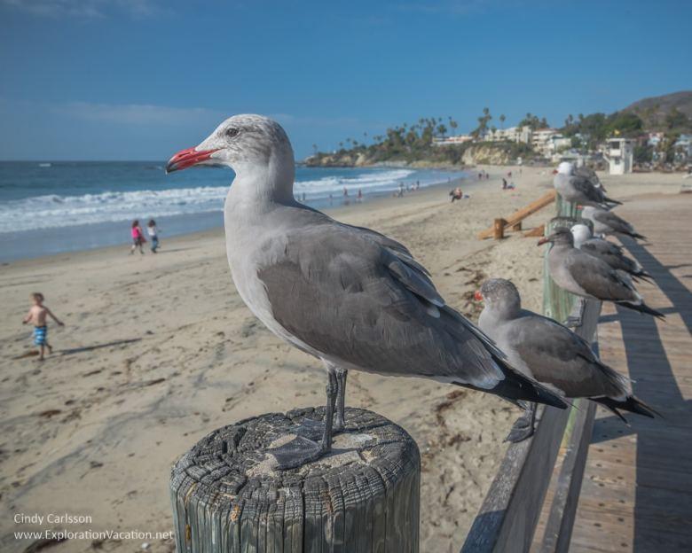 sea gulls on a fence