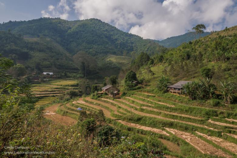 rice fields Northern Vietnam - ExplorationVacation