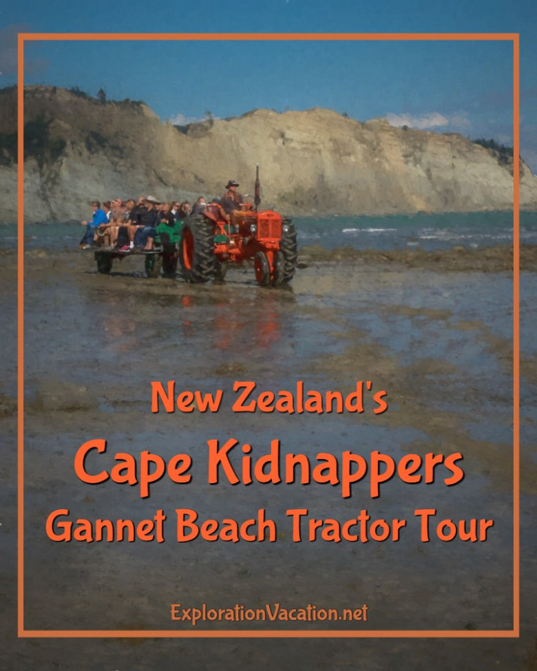 See a beautiful beach, learn about New Zealand's geology, and visit a large gannet colony on the Cape Kidnappers tractor tour in Hawkes Bay - ExplorationVacation.net
