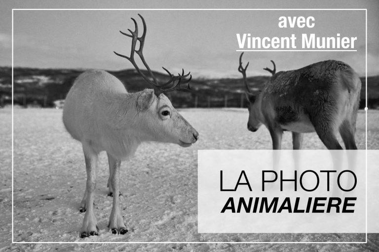 Cover Article - Photo animalière avec Vincent Munier