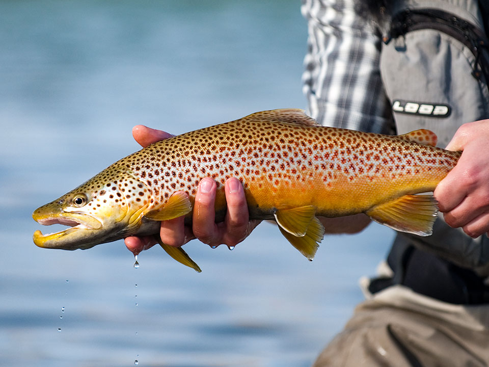 fishing rentals in bozeman