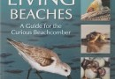 Florida's Living Beaches – A Guide for the Curious Beachcomber