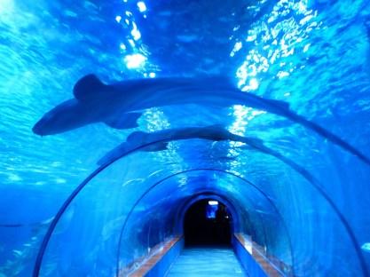 sharks-452909_1920