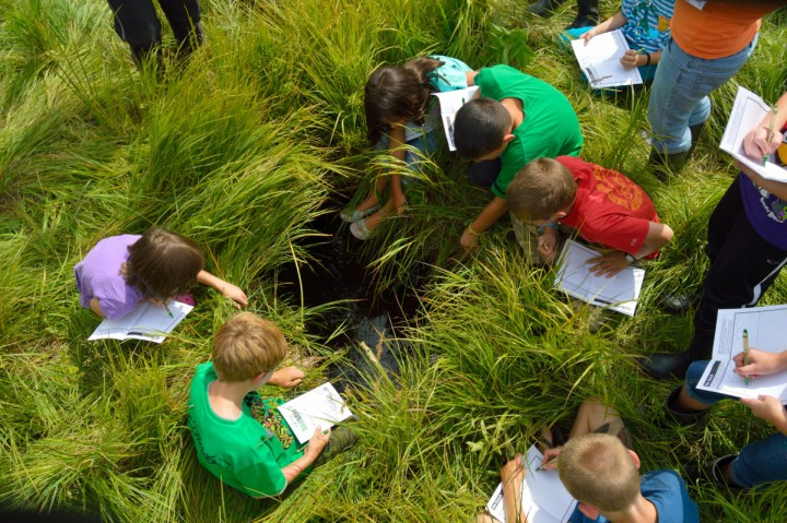 citizen-science-kids-in-grass