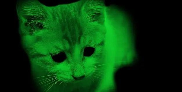 Светящийся в темноте котенок, фото фотография