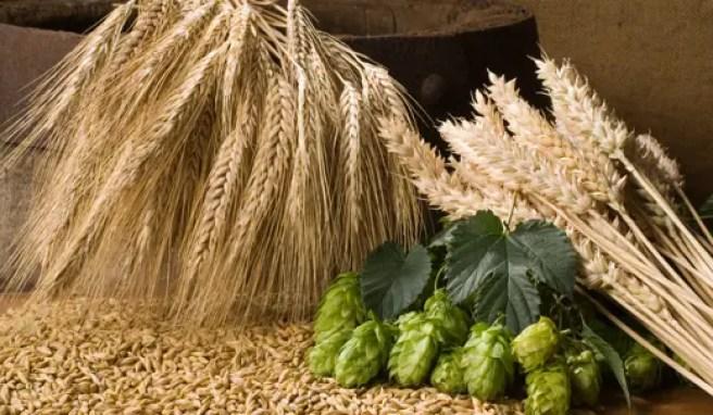 natural-beer-ingredients