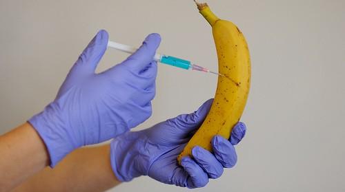 gmo-banana1