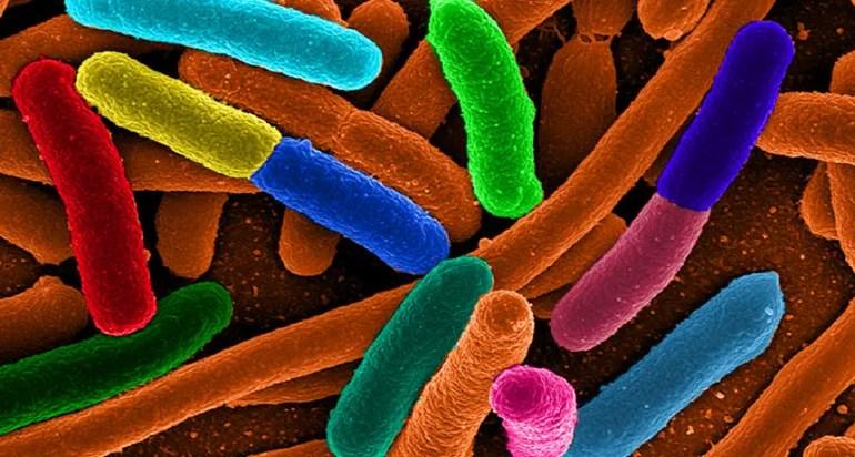 kb_diverse_e_coli_free