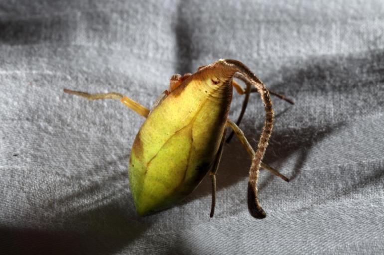 leaf-spider-02-ngsversion-1479303009221-adapt-945-1