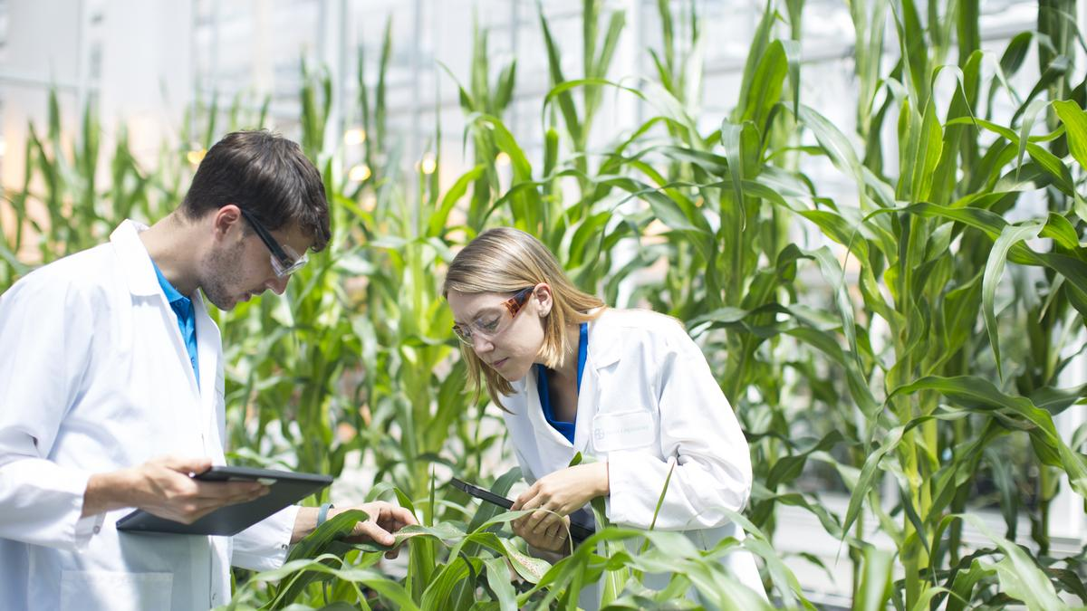 The Applications of Biotechnology In Agriculture and Its Advantages