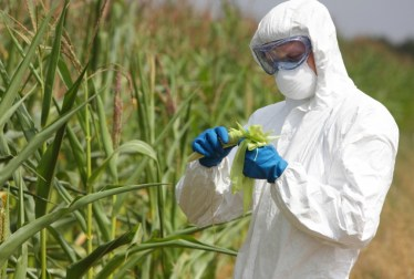 genetic engineering in Agriculture