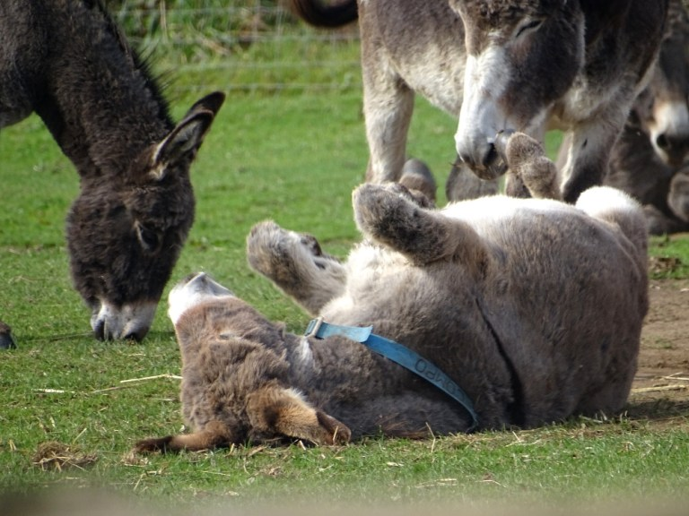Flicka Donkey Sanctuary