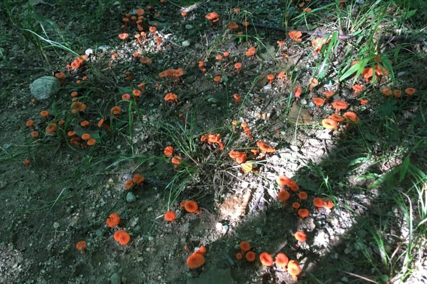 Bishop Swamp Mushrooms