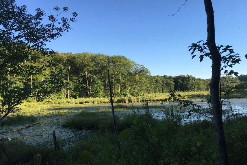 Bishop Swamp